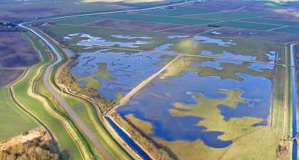 Conservation in the Fens